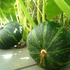 green_pumpkin_seeds