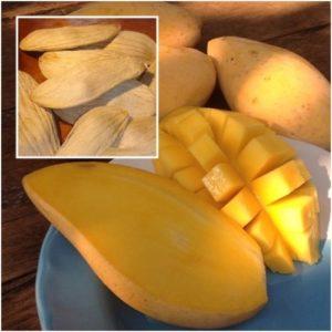 mango_seeds