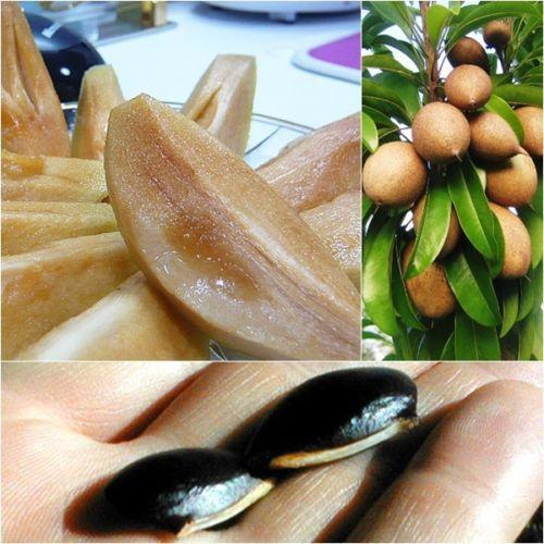 sapodilla_fruit_seeds