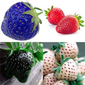 strawberry_seeds
