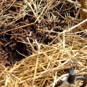 Soil-care-pic