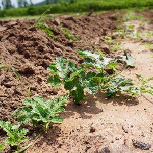 Soilcare