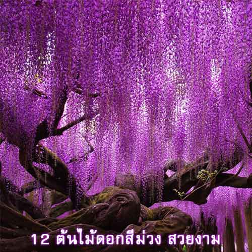 12-Purple-Flowering-Trees-news-site